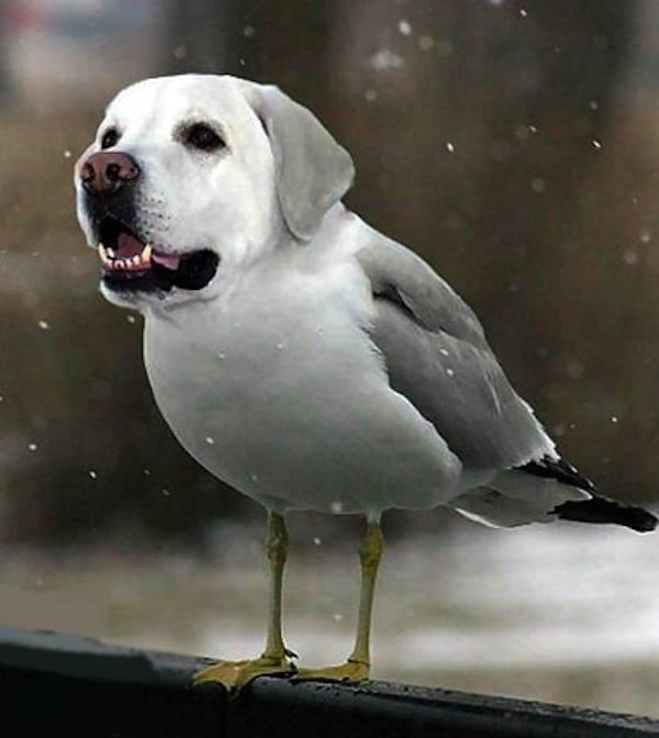 Dog Hybrid